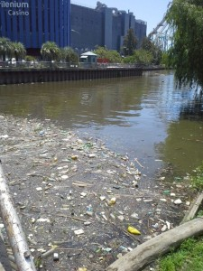 FrischFisch im Fluss
