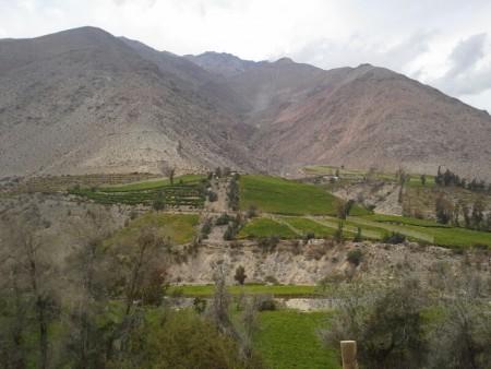 Rebberge a gogo im Valle del Elqui