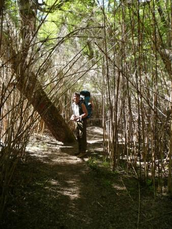 Bambus in Patagonien? Ja