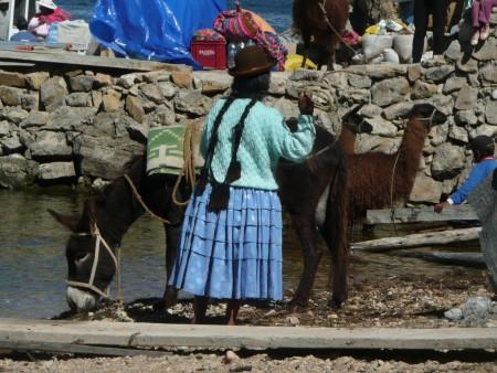 Esel und Lama machen Pause vor der Arbeit