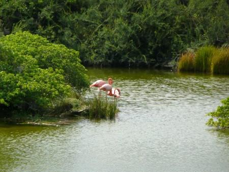 Flamingos begleiten uns schon die ganze Reise